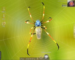 Spider by iBidule