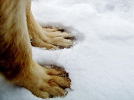 Paws by adhpv