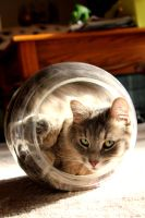 Cat in a Jar -Revisited- by FlavoredWaters