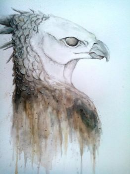Watercolor Harpy eagle by NetrialisPL