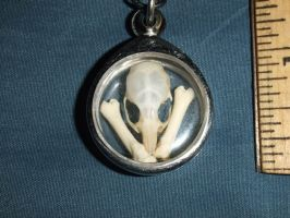 Mouse Skull and Opossum Bone Window Pendant by Magelet