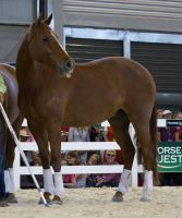STOCK - Equitana 2013-135 by fillyrox