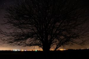 Tree and Stars by AmblingPhotographer