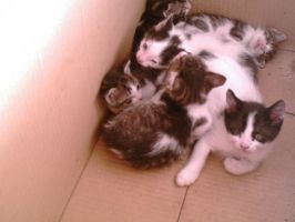 All my kittens by sara1elo