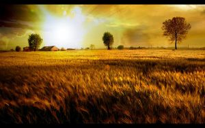 Fields Of Gold by phil2001