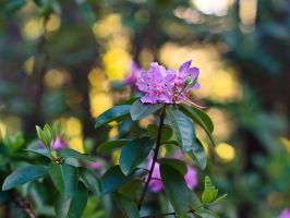 5 Days of Flowers 2014: Day 5b by Henrickson