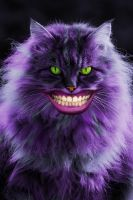 Cheshire Cat by studiocaze