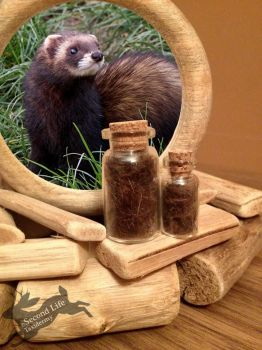 Fitch fur-bottle FOR SALE *Ethically sourced* by SecondLifeTaxidermy