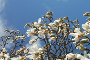 Blossom on Blue by Tangent101