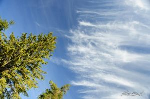 clouds and trees by albuemil