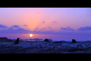 Seals By Sunrise by CainPascoe