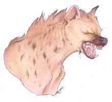 Snarling Hyena by Korrok
