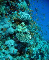 Coral Reef by MikeOSoerensen