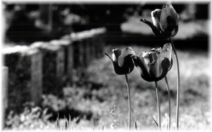 Flowers and Tombstones. by Anti-conformity