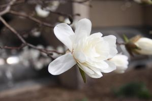White flower bud 3 by VamprissGhoul