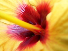 deep red and intense yellow by ditistomzelf