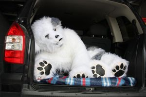 My Dog Quadsuit by jashis