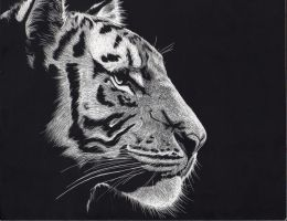 Tiger by Lusk118
