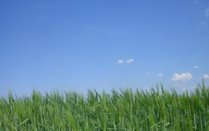 Blue Sky and Green Gras by esCap3