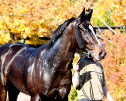 Beautiful thoroughbred horse by DenisaKc