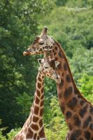 Rothschild and Somali by MorganeS-Photographe