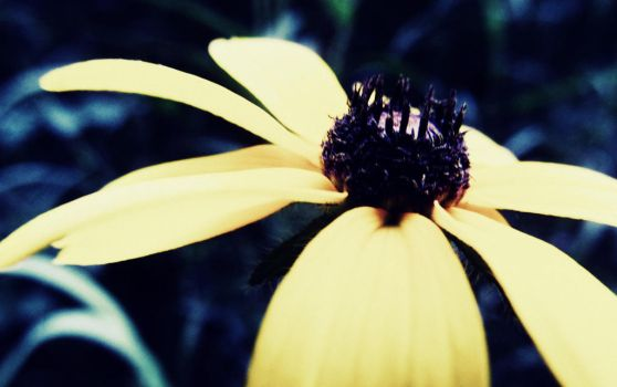 yellow me by lallirrr-photography