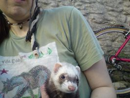 poor ferret pic by MooshuFezrit