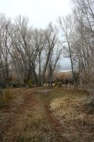 Bannack Ghost Town 260 by Falln-Stock