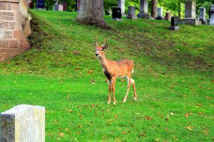 The Cemetery Deer by Rob234111