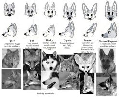 Guide to the Popular Canines by NeonSlushie