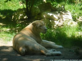 White lioness by Cansounofargentina