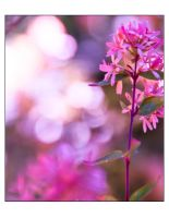 pretty in pink by tspargo-photography