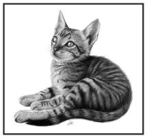 Tabby Kitten by NicksPencil