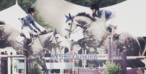 Banner Image by Thirzaaa by HorseStockPhotos