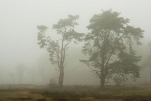 Silent trees in misty land 3 by steppeland