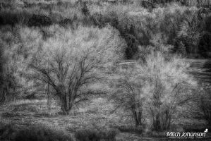 Snowless December BW by mjohanson