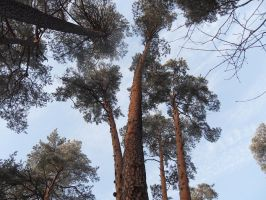 the trees 2 by rimis