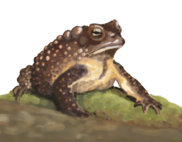 Toad by speckledfrog