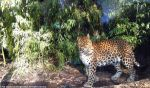 North chinese leopard V by Cansounofargentina