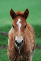 Filly by Paabel