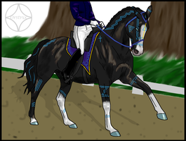 Poseidon's First Dressage Competition by Orstrix