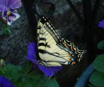 Butterfly 1 by charmedy