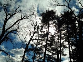 Clouds and pines by GUDRUN355