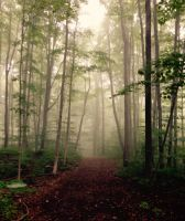 Misty woods by Ontarionative