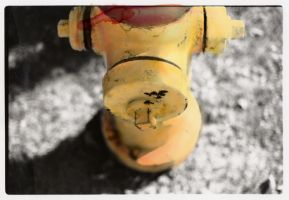 Yellow Fire Hydrant. by lovetoast