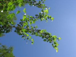 mulberry branch 01 by CotyStock