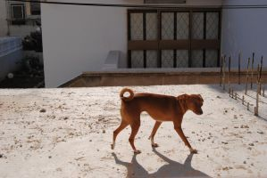 dog on the roof by AngelicPicture