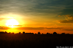Rice Field Sunset by morrigan-erinyes