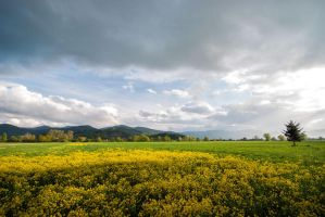 Fields Around Ljubljana II by fidekk