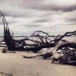 Dead Tree- All Washed Up by Ace-Of-Angels-xx